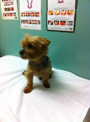 Yorkie and Vet Schedule