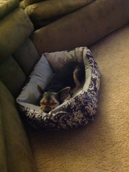 Owner submitted photos of Yorkies