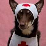 Yorkie's First Aid Kit