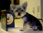 yorkie weight and size estimator
