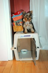 Using a crate to train your Yorkie