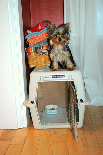 Dog Training Crates For Sale