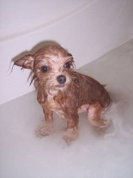 How many tines to bathe my dog