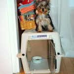 Considering Benefits of Crate Training for your Yorkie