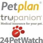 A Guide to Pet Insurance for Your Yorkshire Terrier