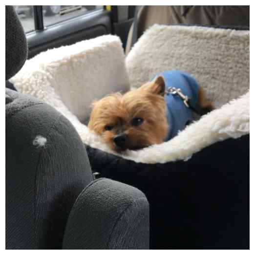 Leaving your Yorkie while on vacation