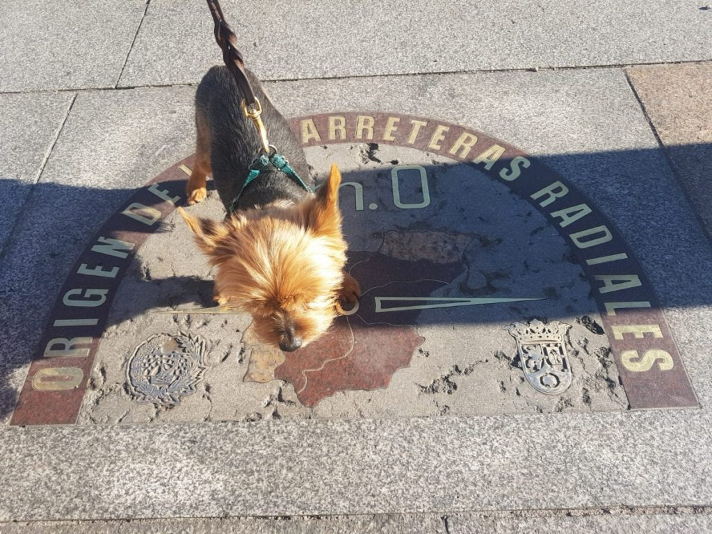 travel with your Yorkie