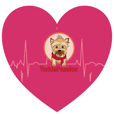 Yorkshire Terrir heart conditions
