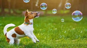 Teach Your Dog to Chase Bubbles