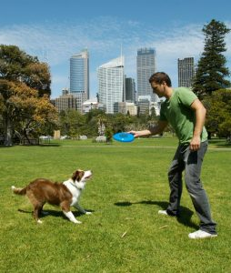 Get your dog into Frisbee