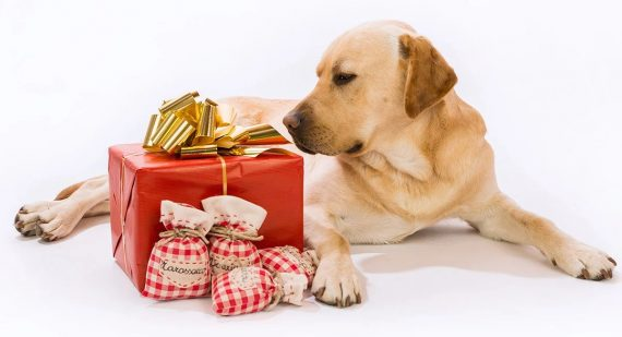 Gift Ideas for Dogs & Dog Lovers