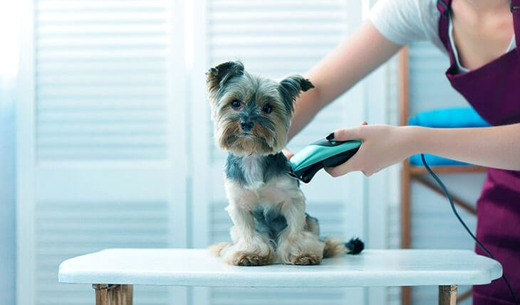 Dog Clippers for Yorkie