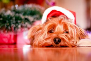 a dog with a santa hat