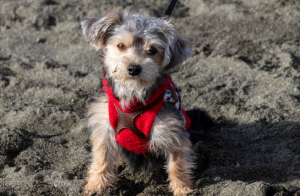 a dog with red collar