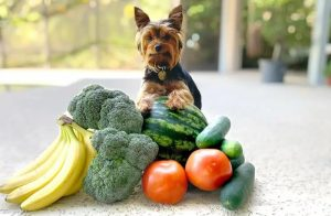 yorkie fruits and vegetables